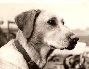 11 Jenny. John Robertson's dog